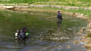 Рониоци уклањају подводно растиње из Језера 1 код Житопродукта